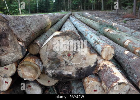 Big tree logs on the logging site in the middle of the forest - Stock Photo