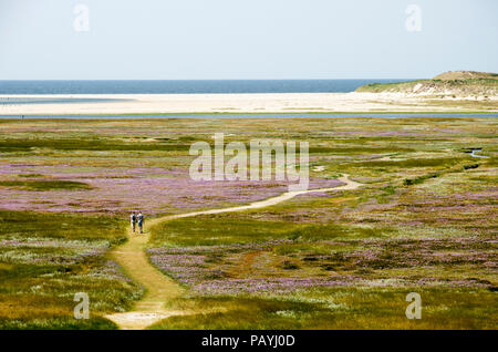 View from the top of a dune towards the Slufter nature reserve on the Dutch island of Texel, with a sandpath meandering through fields of sea lavender - Stock Photo