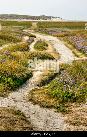Sandpath leading through fields of sea lavender and other salt tolerant wildflowers in the Slufter nature reserve on the Dutch island of Texel - Stock Photo