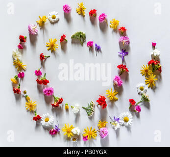 Various colorful spring flowers creating pattern arranged in a spiral or circle on white background. Flat lay summer natural concept. Free space - Stock Photo