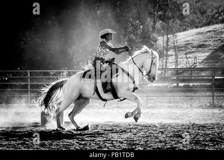 A real California cowgirl or color rides a white horse, barrel racing action shot in black and white, front hooves in air, racing toward the finish. - Stock Photo