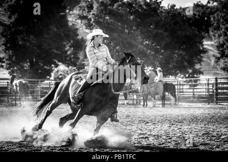 Real cowgirl shows true grit as her horse leans, digs in during a barrel race stirring up dust from its hooves as they turn. Racing rider on horseback. - Stock Photo