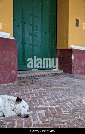 Street dog asleep on the cobbles in Trinidad, Cuba - Stock Photo