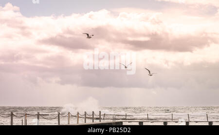 three of white bird are flying above the big wave sea under huge cloudy sky at rock pool beach. freedom alive at the beach - Stock Photo
