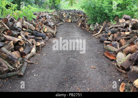 Piles of chopped logs stacked high and far at the Grove in Glenview, Illinois. - Stock Photo