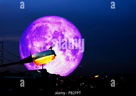 bird hand on power electric light pillar set up on the road and full moon background, Elements of this image furnished by NASA - Stock Photo
