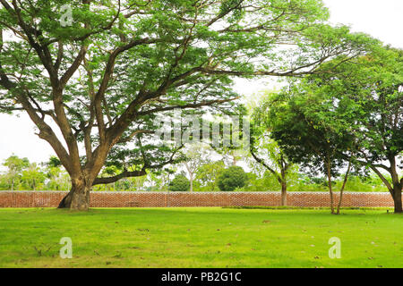 Giant green tree and green grass in garden and brick wall - Stock Photo