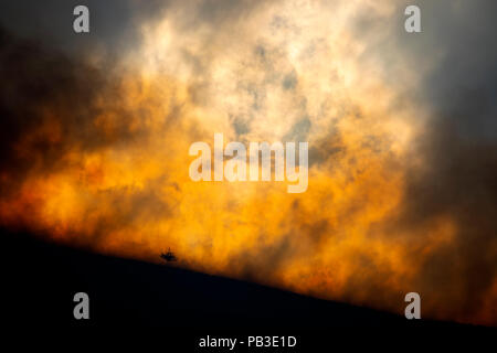Flames, heat and smoke about to engulf a lone tree from the moorland fire at Llantysilio Mountain along the Horseshoe Pass, Corwen near Llangollen as the fire burns over the mountain due to heatwave temperatures in the UK - Stock Photo