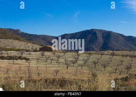 Prunus dulcis, Almond grove in the Andalucia mountain landscape, Spain, February 2018 - Stock Photo