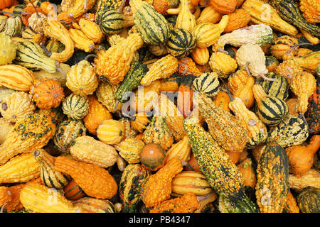 Closeup of several pumpkins in different forms and colors on a market in Switzerland - Stock Photo