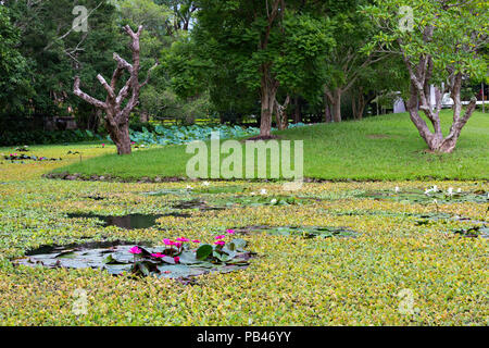 Pink water lillies in a lake in Thailand - Stock Photo