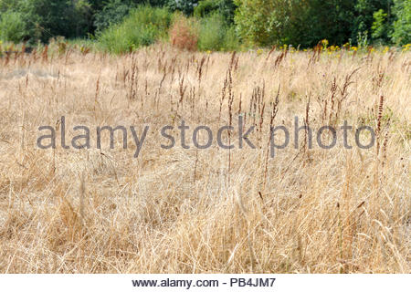 Dried up wildlife ponds surrounded by grassland in Shropshire UK - Stock Photo