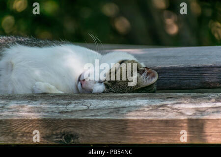 A pretty cat taking a nap between a couple of 2 x 6 boards lying on a picnic table outside - Stock Photo