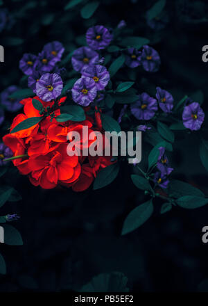 Beautiful fairy dreamy magic red ruby and purple flowers with dark green leaves, retro vintage color, soft selective focus, blurry background, copyspa - Stock Photo
