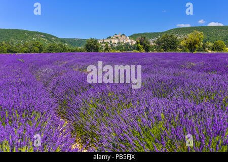 lavender field with village Banon, Provence, France, panorama view, department Alpes-de-Haute-Provence - Stock Photo