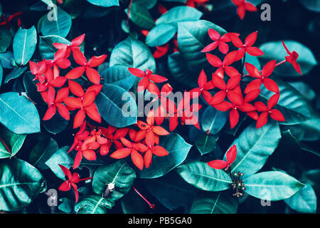 Beautiful fairy dreamy magic red small flowers with bright green cyan leaves background, toned with instagram filters in retro vintage color, soft sel - Stock Photo