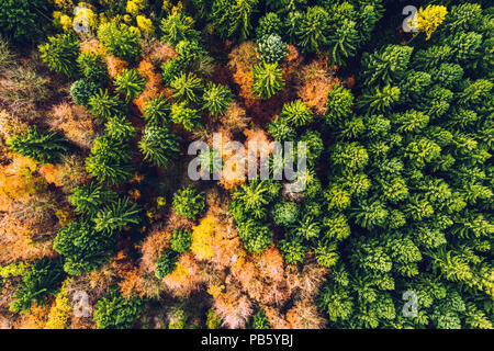 Autumn forest with colorful trees and leafs from above in aerial view taken during drone flight as background and template - Stock Photo