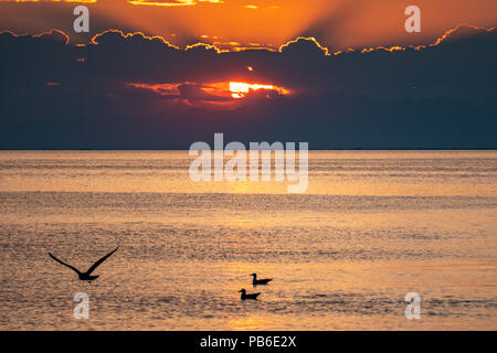 Trieste, Italy, 26 July 2018.  Seagulls at sunset in the Adriatic port of Trieste in northern Italy.  Photo by Enrique Shore - Stock Photo