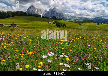 View of the Sassolungo (Langkofel) and Sassopiatto Group of the Italian Dolomites from Alpe di Siusi in Val Gardena. - Stock Photo