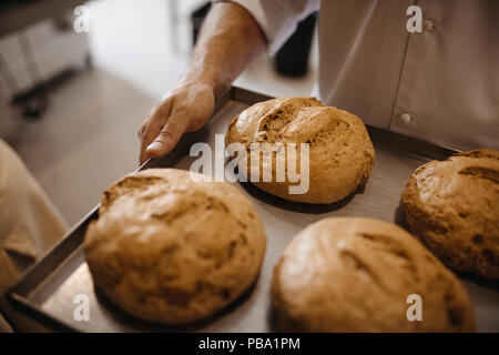 Close up of freshly baked bread on a baking tray in hand of a baker. Man moving a tray of freshly baked bread in a bakery. - Stock Photo