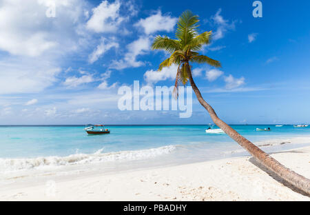 Coconut palm tree grows on white sandy beach of Saona island. Caribbean Sea coast, Dominican republic - Stock Photo
