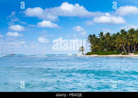 Palms trees on sandy beach. Caribbean Sea, Dominican republic, Saona island coast, popular touristic resort - Stock Photo