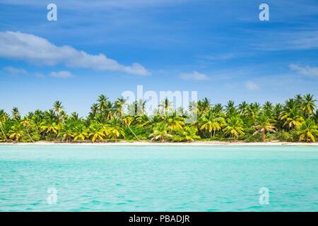 Palms trees grow on the beach of Saona island. Background photo of Caribbean Sea coast, Dominican republic - Stock Photo