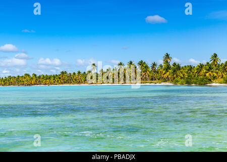 Background photo of Caribbean Sea coast with palms trees growing  on the beach of Saona island. Dominican republic - Stock Photo