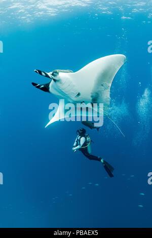 Giant manta ray (Manta birostris) with scuba diver below, El Boiler dive place, San Benedicto Island, Revillagigedo Archipelago Biosphere Reserve, Socorro Islands, Western Mexico - Stock Photo