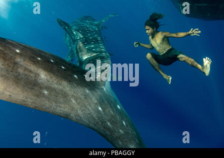Whale Shark (Rhincodon typus) and local fisherman freediving, Cenderawasih Bay, West Papua, Indonesia. Winner of the Man and Nature Portfolio Award in the Terre Sauvage Nature Images Awards Competition 2015. - Stock Photo