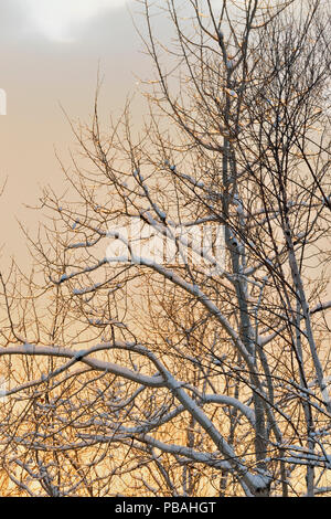 Evening light on snow-dusted trees in early winter, Greater Sudbury, Ontario, Canada - Stock Photo