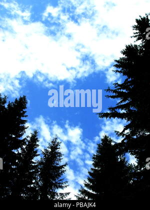 Green fir trees under the blue sky - Stock Photo
