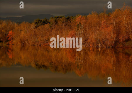 THE FOREST THAT MIRROR IN THE LAKE - Stock Photo