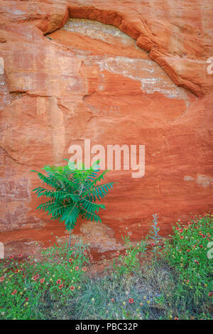 Canyon Walls in Oklahoma's Red Rock Canyon State Park - Stock Photo