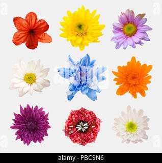 Big Selection of Various Flowers Isolated on White Background. Red, Pink, Yellow, blue Colors including rose, dahlia, marigold, zinnia, straw flower,  - Stock Photo