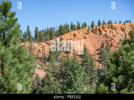 Utah, USA. 1st June, 2018. Bryce Canyon National Park, a sprawling reserve in southern Utah popular with tourists and vacationers, has many scenic areas without the colorful hoodoos it is known for. Credit: Arnold Drapkin/ZUMA Wire/Alamy Live News - Stock Photo