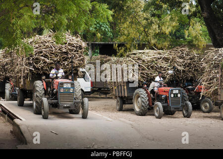 Tractors towing trailers loaded with harvested sugar cane (Saccharum officinarum) at weighing and transportation facility in Sri Lanka - Stock Photo