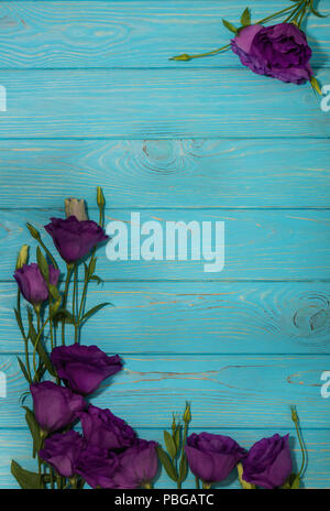 Violet flowers - eustoma, on a white blue background. Copy space. - Stock Photo