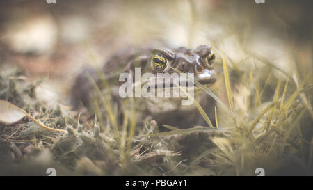 Animals and vermin of the planet, outdoor photographs at every moment of the day, natural light. - Stock Photo