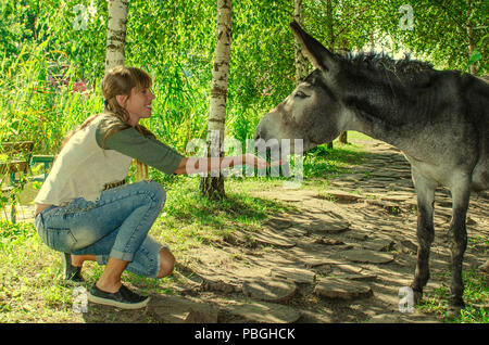 beautiful smiling girl feeds the grass of the donkey in the park - Stock Photo