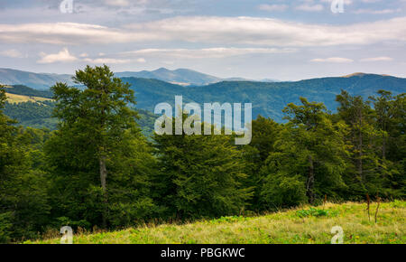 primeval beech forest of Carpathian mountains. Svydovets ridge in the distance. beautiful nature scenery. - Stock Photo