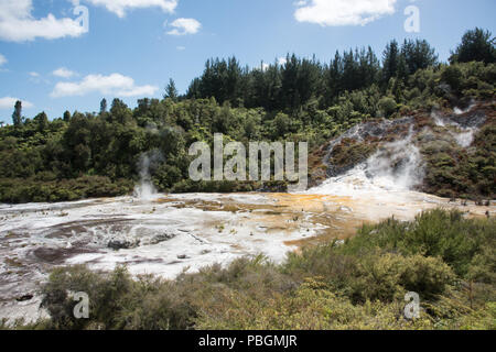 Stunning forest landscape with natural microbial mats and silica formation at the geothermal area Orakei Korako in Rotorua, New Zealand - Stock Photo