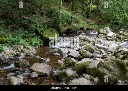 stream in the Black Forest - Stock Photo