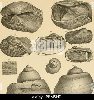 """795 Image from page 80 of """"Denkschriften der Kaiserlichen Akademie der Wissenschaften, Mathematisch-Naturwissenschaftliche Classe"""" (1897) - Stock Photo"""