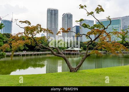 Hamarikyu Gardens, Tokyo, Japan Stock Photo: 137212854 - Alamy