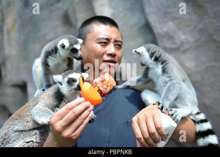 Qingdao, China's Shandong Province. 28th July, 2018. Ring-tailed lemurs are fed with a piece of frozen fruits to cool off from hot weather at Qingdao Forest Wildlife World in Qingdao, east China's Shandong Province, July 28, 2018. Credit: Yu Fangping/Xinhua/Alamy Live News - Stock Photo