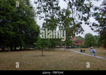 Welwyn Garden City, UK. 29th July, 2018. Leaves falling from trees after wilting during heatwave and making it look like Autumn instead of summer. Wind and rain at weekend after high temperatures in the UK throughout week. Credit: Andrew Steven Graham/Alamy Live News - Stock Photo