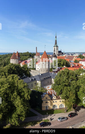 City walls' and St. Olaf's (or Olav's) church's towers and other buildings at the Old Town in Tallinn, Estonia, viewed from above in the summer. - Stock Photo