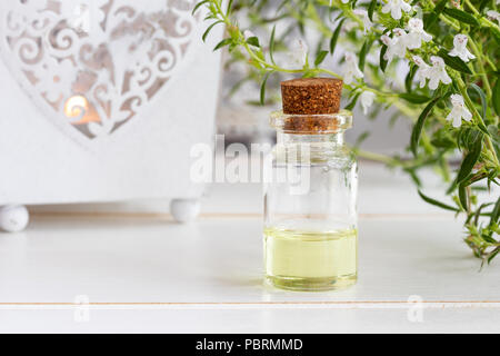 A bottle of mountain savory essential oil with fresh blooming Satureja montana - Stock Photo