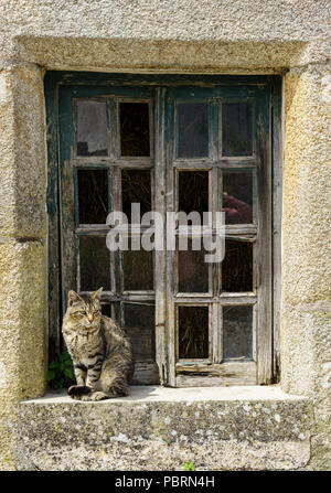 Cat sitting on a windowsill of a cery old stone built house with faded wooden window frame. - Stock Photo